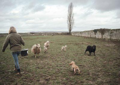 Une ferme pour éveiller petits et grands