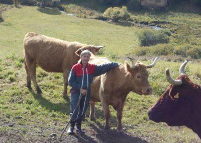 Une yourte auprès des vaches en Auvergne