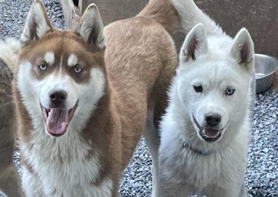 Nordique des Marais, activités de plein air avec mes huskies