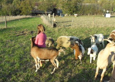 Ferme Pédagogique, l'animal comme partenaire de travail