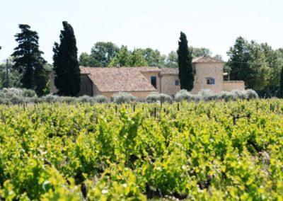 Un domaine viticole engagé au pied du Mont Ventoux
