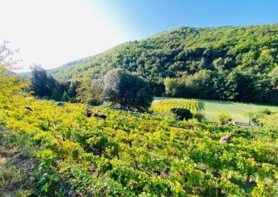 Clos de La Rouvière : Relancer la vigne en Cévennes